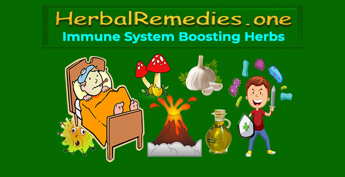 Immune System Booster Supplements
